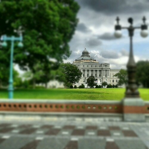 """Peering between the lamp posts at the beauty across the way.""Washington, DC"